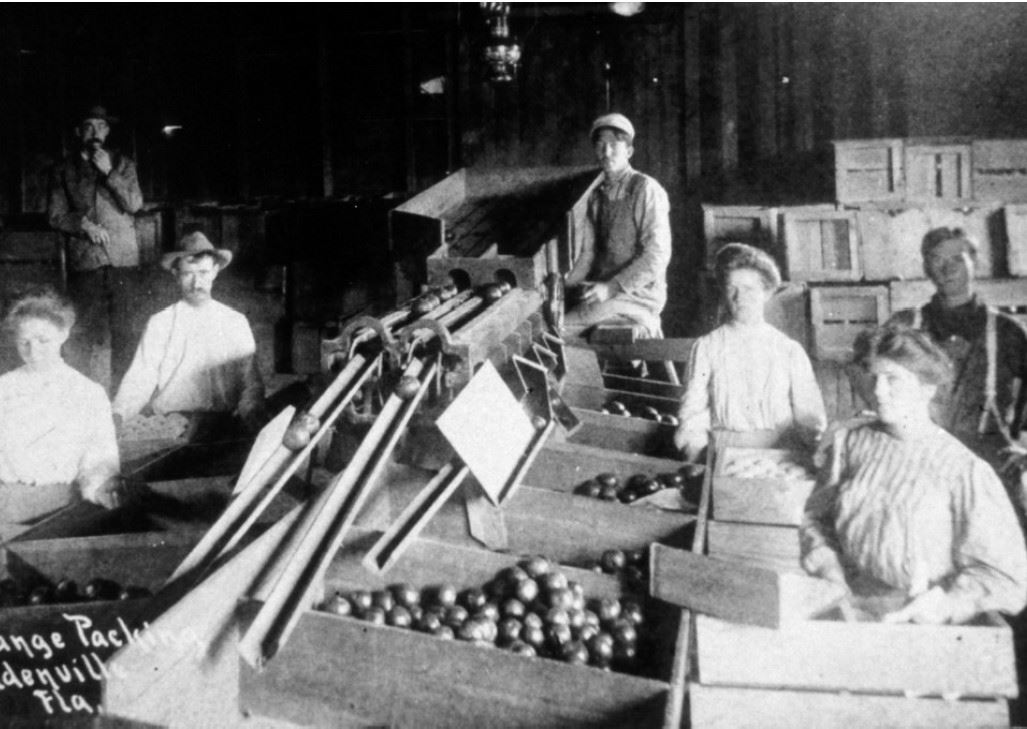 History Photo 4 - Citrus PackingPlant